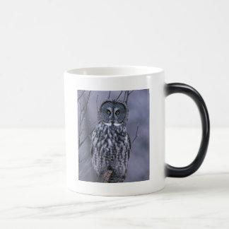 owl branches tree forest park bird cy magic mug