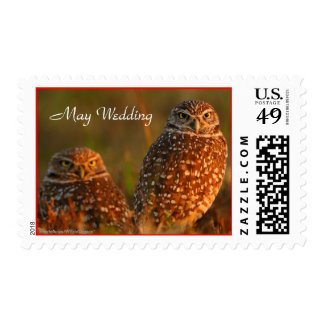 Owl, Burrowing, Couple, May Wedding Postage