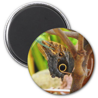 Owl Butterfly Magnet