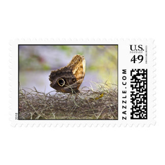 Owl Butterfly on Spanish Moss Postage