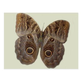Owl Butterfly Postcard