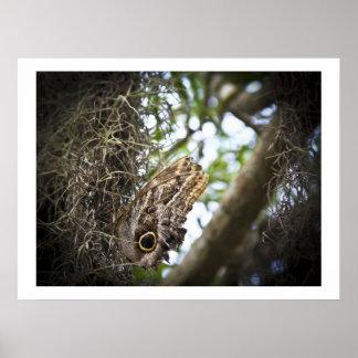 Owl Butterfly Print