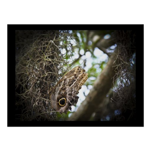 Owl Butterfly Posters