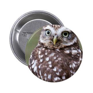 Owl Button Badge