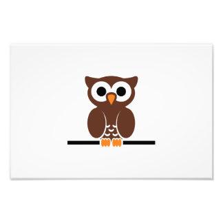 Owl cartoon photograph
