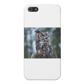 Owl Cases For iPhone 5