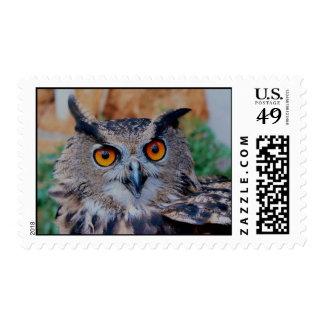 Owl Close Up Postage