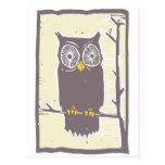 Owl Color Postcard
