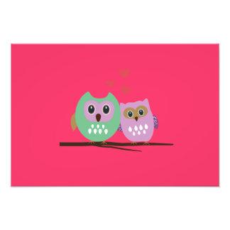 Owl couple photo