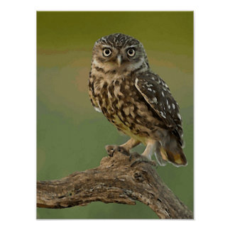 Owl Eye Bird Wild Poster