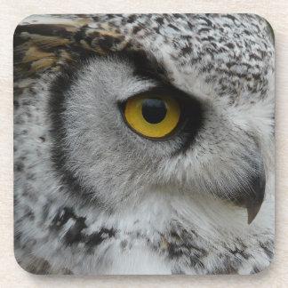 Owl Eye - Close Up Photo Drink Coaster