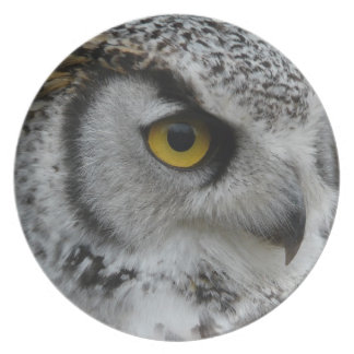 Owl Eye - Close Up Photo Plate