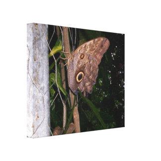 Owl Eye Moth Canvas Print