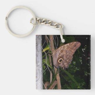 Owl Eye Moth Keychain