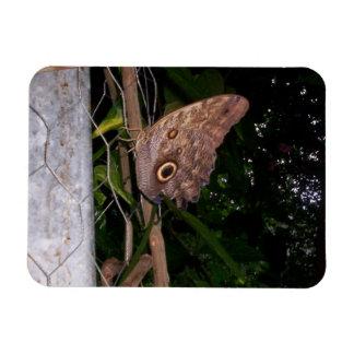Owl Eye Moth Magnet