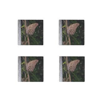 Owl Eye Moth Stone Magnet