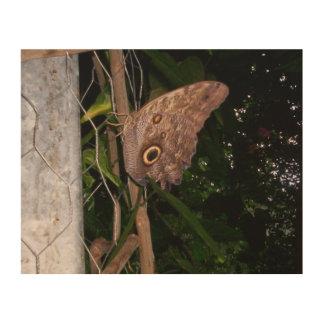 Owl Eye Moth Wood Print