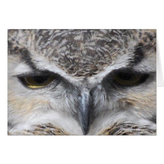 Owl Eye Raptor Great Horned Photo Card