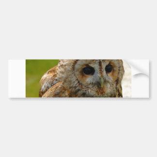 Owl Eyes Bumper Sticker