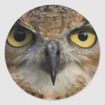 Owl Eyes Classic Round Sticker