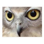 Owl Eyes Post Cards