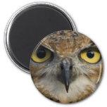 Owl Eyes Refrigerator Magnet