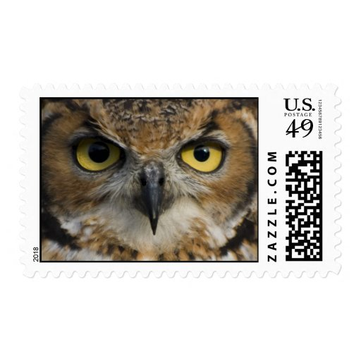 Owl Eyes Stamps