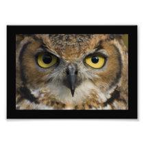 Owl Eyes with black border Photo Print