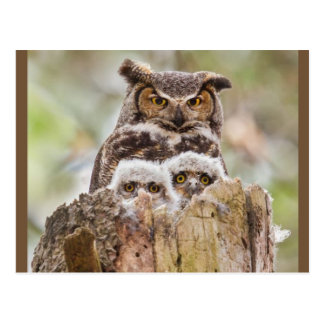 Owl Family postcard with owl bits