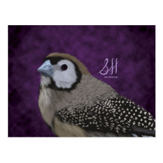 Owl Finch Postcard