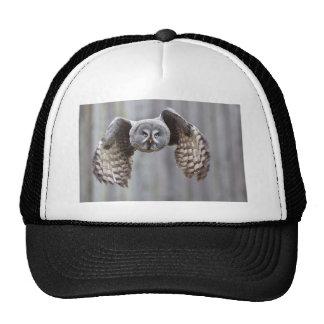 owl flying animal feathers bird park forest birds trucker hat