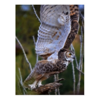 Owl Fractal Postcard