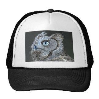 Owl, Gray Screech Owl Ball Cap Hat