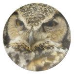 OWL - Great Horned Owl Face Photo Dinner Plates