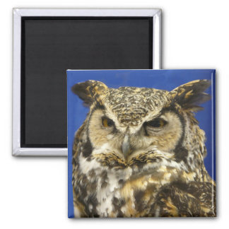 OWL - Great Horned Owl Face Photo 2 Inch Square Magnet