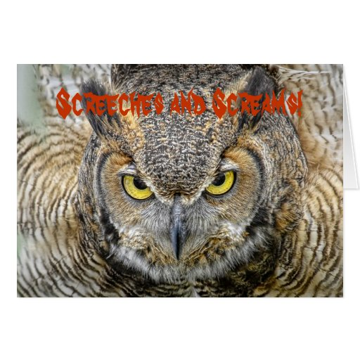 Owl Halloween Greeting Card