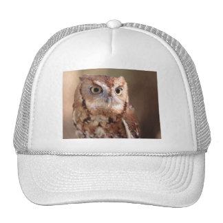 owl trucker hats