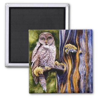 Owl Hoo's Look'n Magnet
