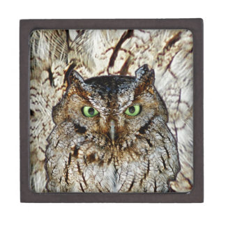 Owl Hoot Eyes Animal Bird Premium Keepsake Box