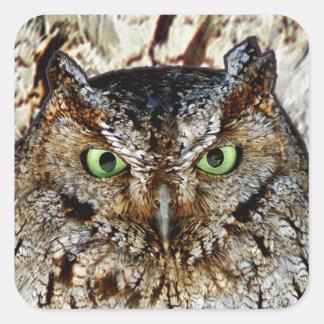 Owl Hoot Eyes Animal Bird Square Sticker