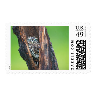 Owl in a tree postage