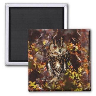 Owl in Autumn Fridge Magnets
