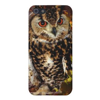 Owl in Autumn iPhone 5 Cases