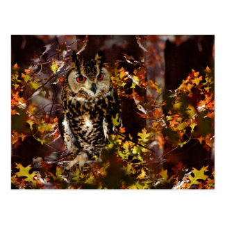 Owl in Autumn Post Card