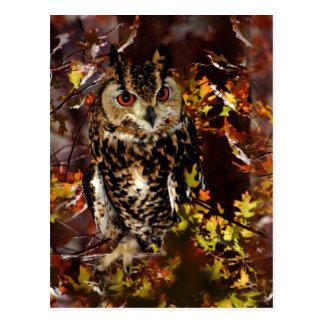 Owl in Autumn Postcards