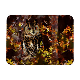 Owl in Autumn Magnets