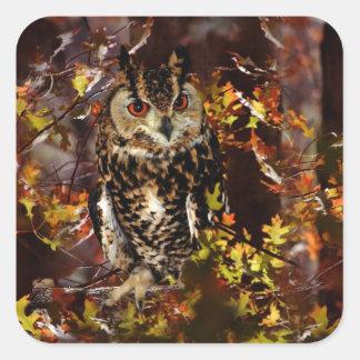 Owl in Autumn Square Stickers