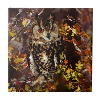 Owl in Autumn Tile