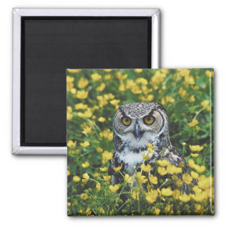 Owl in Buttercups 2 Inch Square Magnet