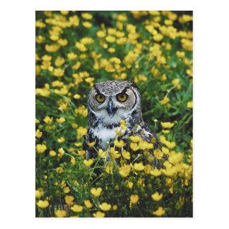 Owl in Buttercups Postcard